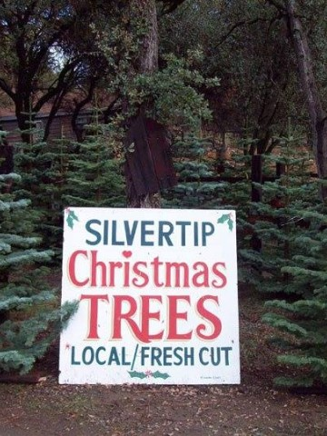 Silvertip Trees (Your Choice)