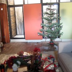 One of our trees on set at ABC\'s Brothers and Sisters