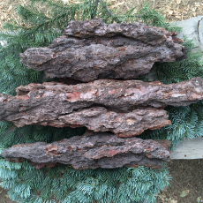 Red Fir Bark